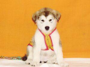 Правильный возраст для дрессировки щенка