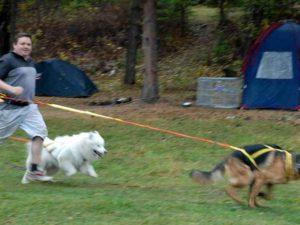 Любительский пояс для бега с собакой