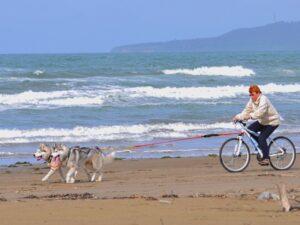 Любительский пояс для езды с собакой