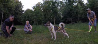 пристройство собаки