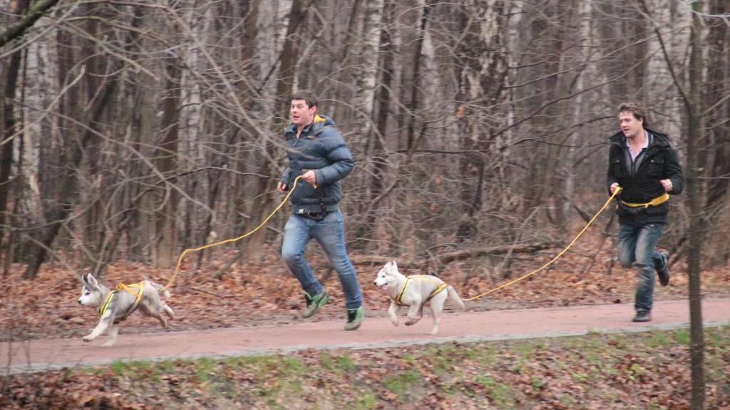 Тренировка щенков